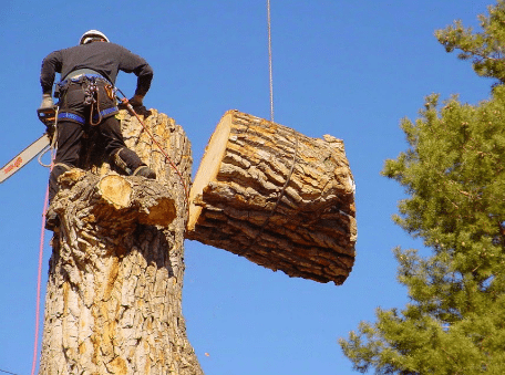 tree removal   Sugarland, TX