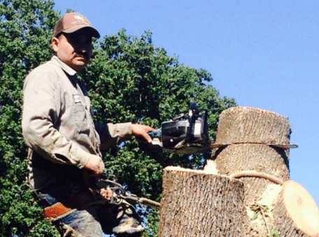 tree trimming services   Greater Houston