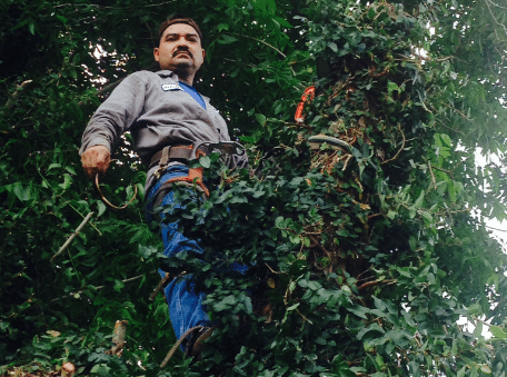 tree trimming services | Stafford, TX